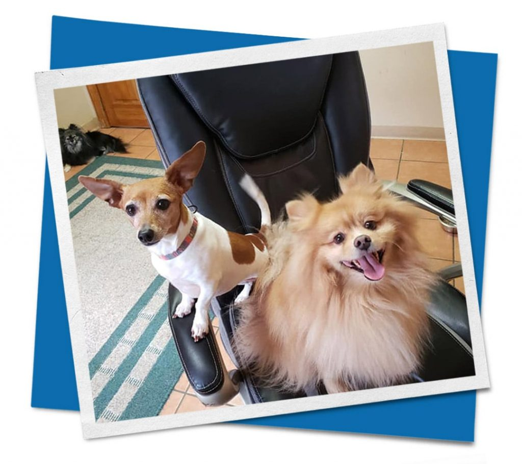 Dogs sitting in black chair