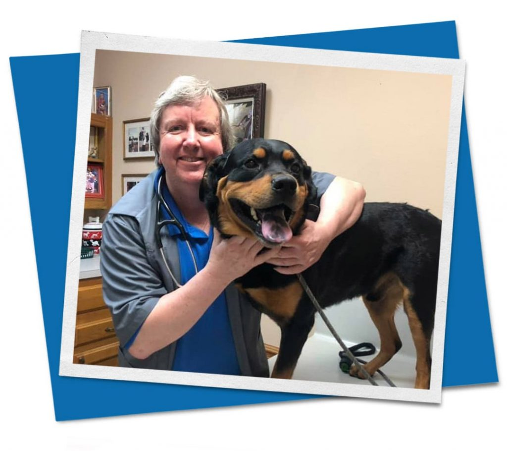veterinarian holding black and brown dog