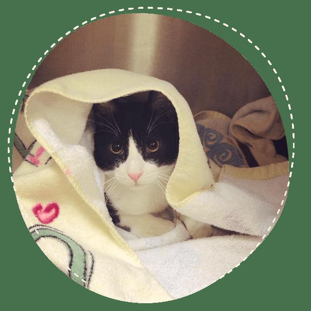 Black and white cat under blanket