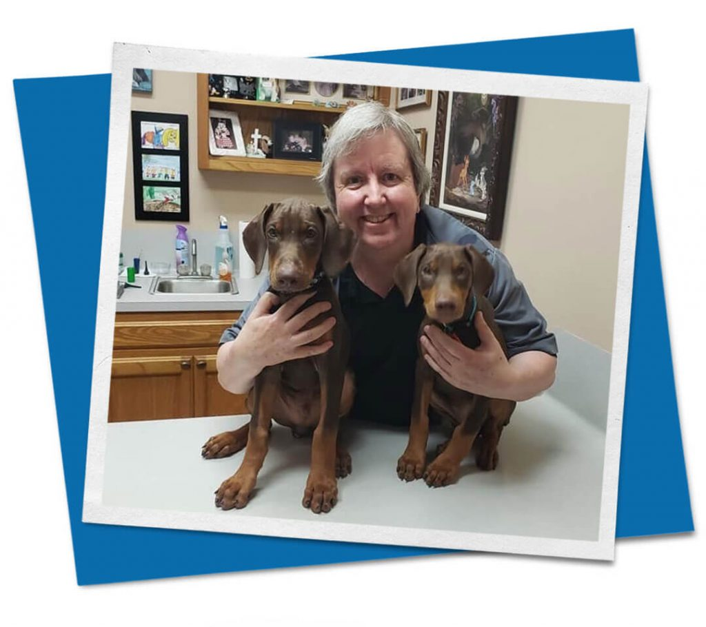 Male veterinarian with two brown dogs